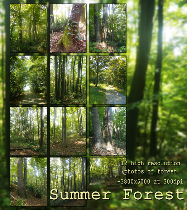 Summer Forest Photos