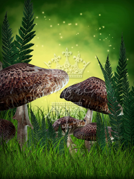 In the Land of Mushrooms